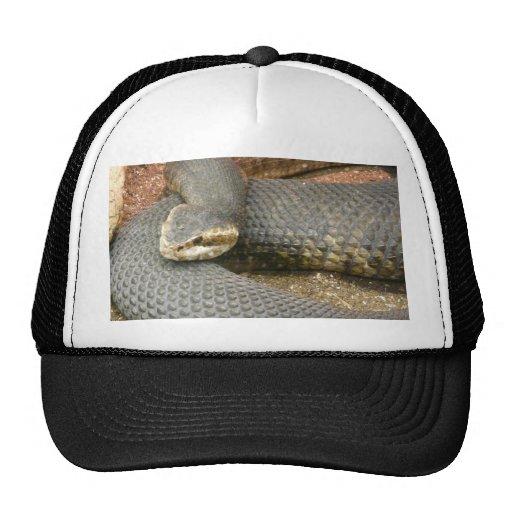 snake hat