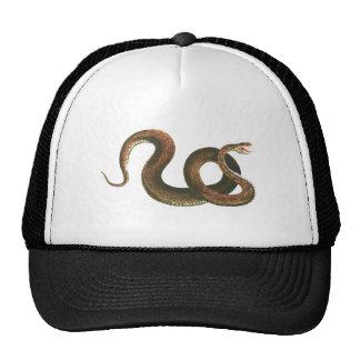 Snake Hats