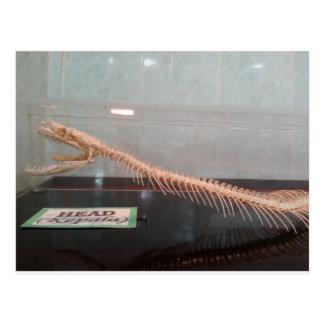 Snake Head Skeleton Postcard