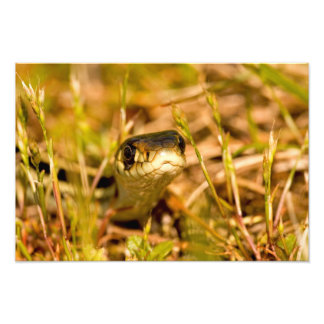 Snake in the Grass Photographic Print