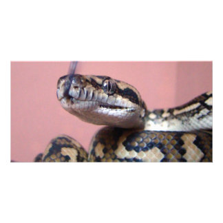 Snake Kiss Custom Photo Card