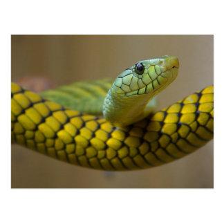 Snake Reptile Postcard
