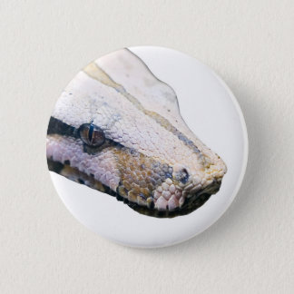 snakes- amazonian constrictor boa 6 cm round badge