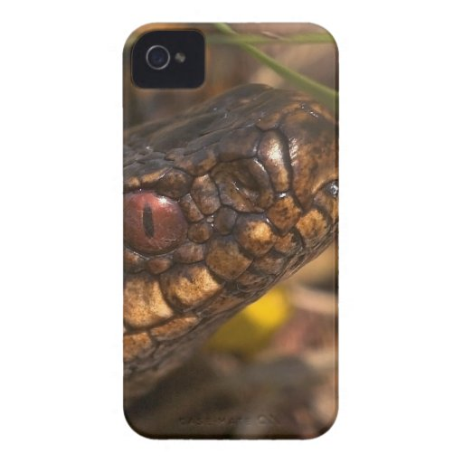 Snakes Head Blackberry Bold Case