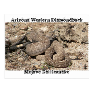 Snakes of Arizona Postcard