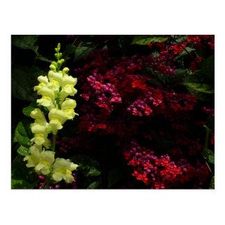 Snapdragon and Pagoda Flowers Postcard