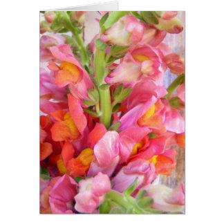 Snapdragons Bouquet Greeting Card