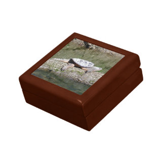 Snapping Turtle Gift Box
