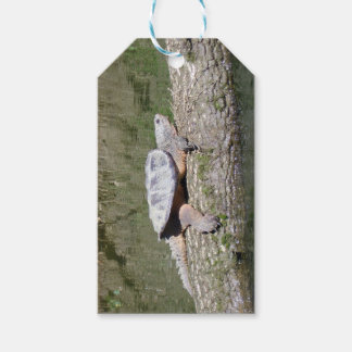 Snapping Turtle Gift Tags