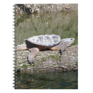 Snapping Turtle Notebook