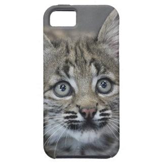 Sneaky Kitten iPhone 5 Case