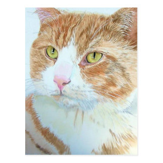 Snickers the Cat Postcard
