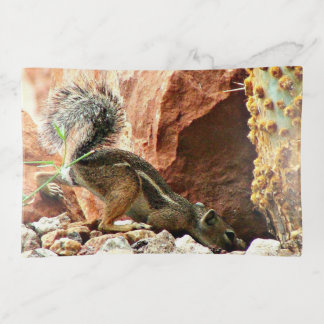 Snooping Mikey Ground Squirrel Trinket Tray