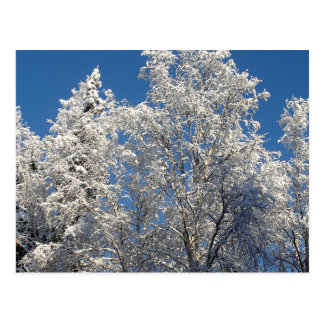 Snow and Ice Encrusted Winter Treescape Postcard