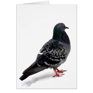 Snow and pigeon card