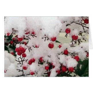 Snow Berries Cards