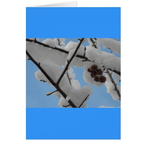snow berry greeting cards