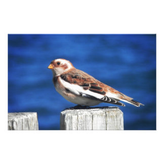 Snow Bunting Customized Stationery