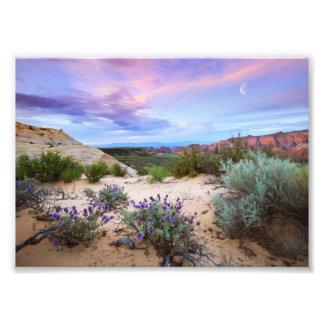 Snow Canyon Sunrise Wildflowers Landscape Photo