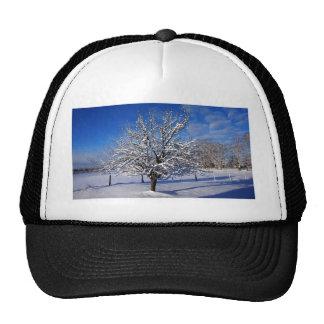 Snow covered Apple tree Cap