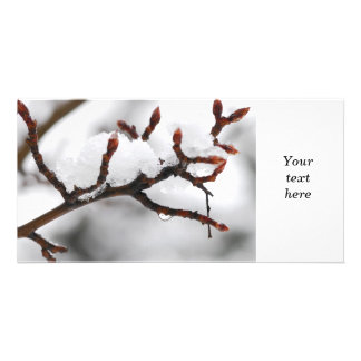 Snow covered branch photo cards