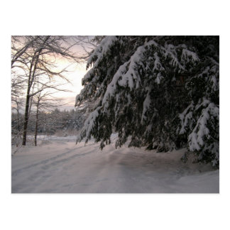 Snow Covered Hemlocks Postcard