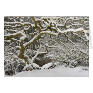 Snow-covered Japanese maple 2 Greeting Card