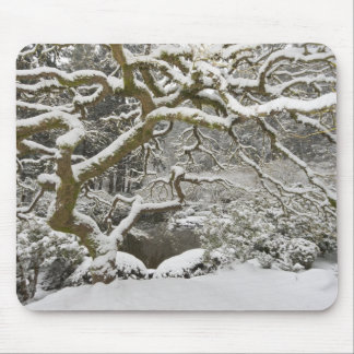 Snow-covered Japanese maple 2 Mousepads