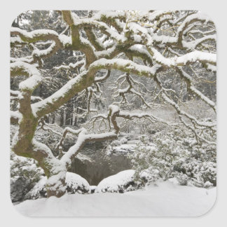 Snow-covered Japanese maple 2 Stickers