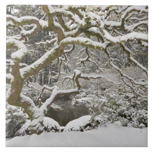 Snow-covered Japanese maple 2 Ceramic Tile