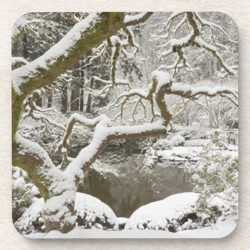 Snow-covered Japanese maple Beverage Coasters