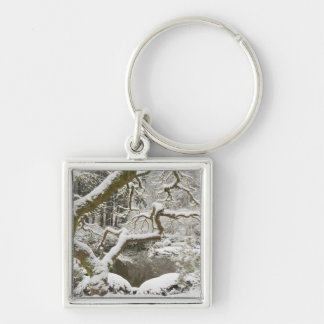 Snow-covered Japanese maple Key Chain