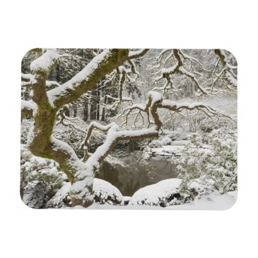 Snow-covered Japanese maple Rectangle Magnets