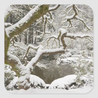 Snow-covered Japanese maple Square Sticker