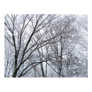 Snow-covered Oak Tree Postcard