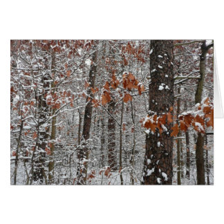 Snow Covered Oak Trees Winter Nature Photography Greeting Card