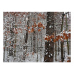 Snow Covered Oak Trees Winter Nature Photography Poster