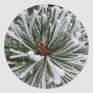Snow-Covered Pine Needles Classic Round Sticker