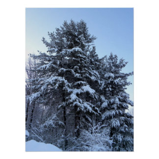 Snow Covered Pine Print