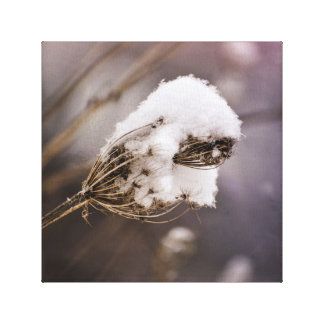 Snow Covered Queen Anne's Lace Dried Winter Plant Canvas Print