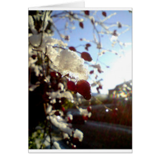 Snow covered red berries card