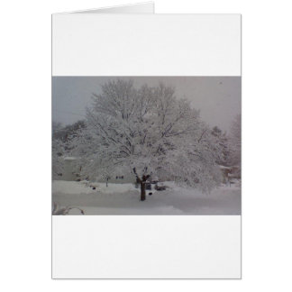 Snow Covered Tree In Maine Card