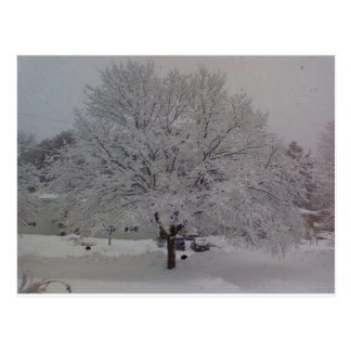 Snow Covered Tree In Maine Postcard
