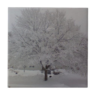 Snow Covered Tree In Maine Small Square Tile