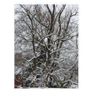 Snow-Covered Tree Postcard