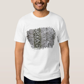 Snow covered tree trunks in Yosemite valley - Shirts