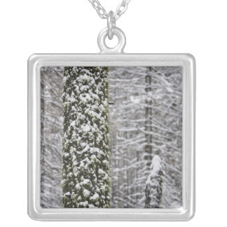 Snow covered tree trunks in Yosemite valley - Square Pendant Necklace