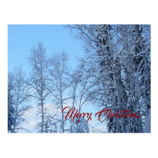 Snow Covered Trees and Blue Sky Postcard