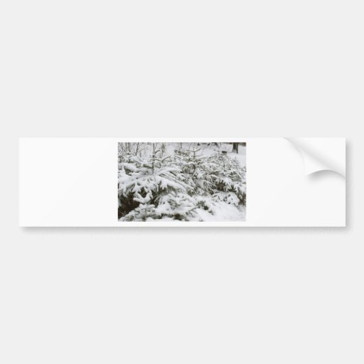 Snow Covered Trees Bumper Stickers