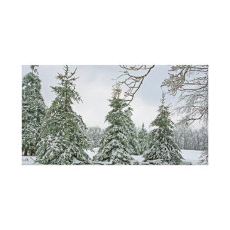 Snow Covered Trees Canvas Stretched Canvas Print